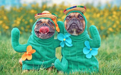 National Dress Up Your Pet Day